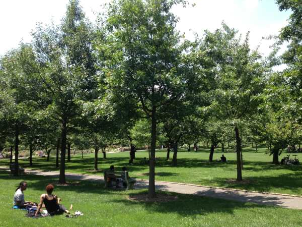 Cherry Orchard within Brooklyn Botanical Gardens