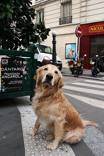 dogs-in-paris