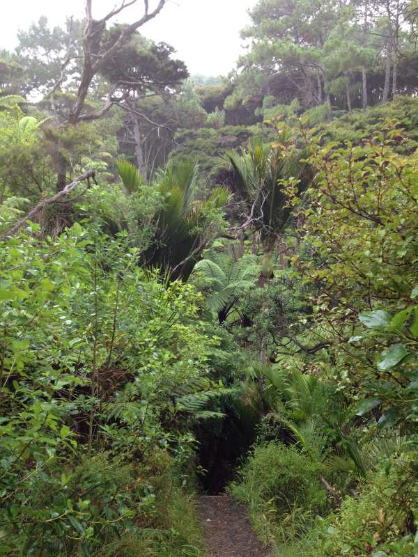 Bush walk to Whangapoua Harbour Estuary