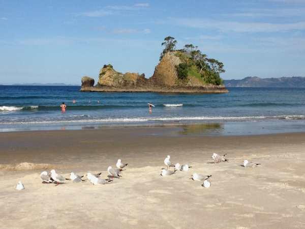 Whangapoua Beach 2